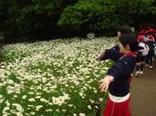 お花畑だー!
