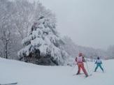 大きな雪の木